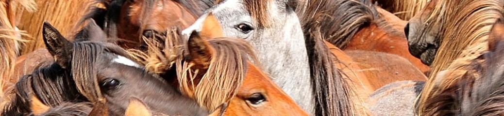 curro de caballos
